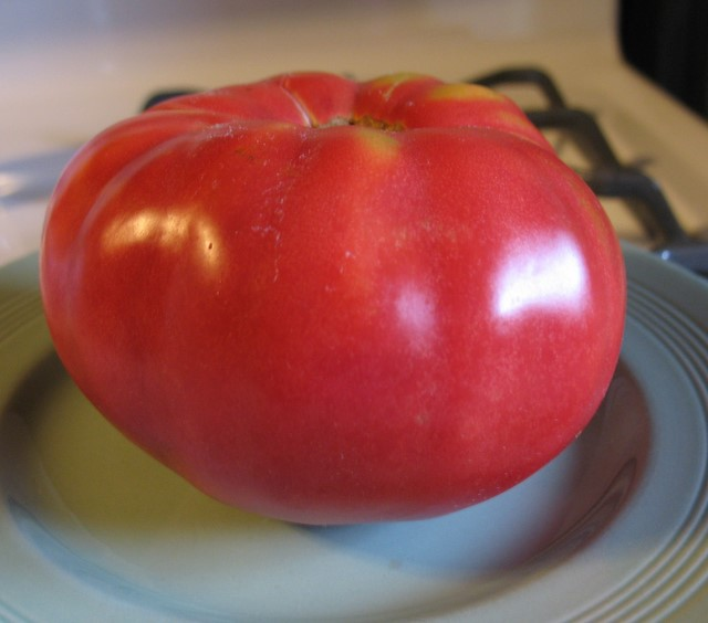 2007 First tomato picked - Crnkovic Yugoslavian - July 27