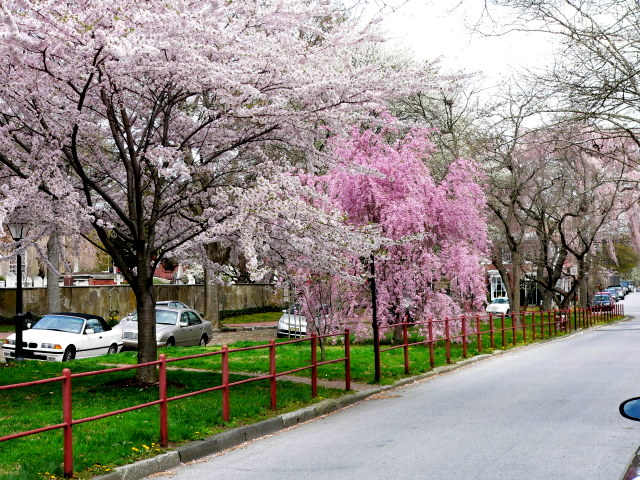 New Castle, Delaware, street in bloom