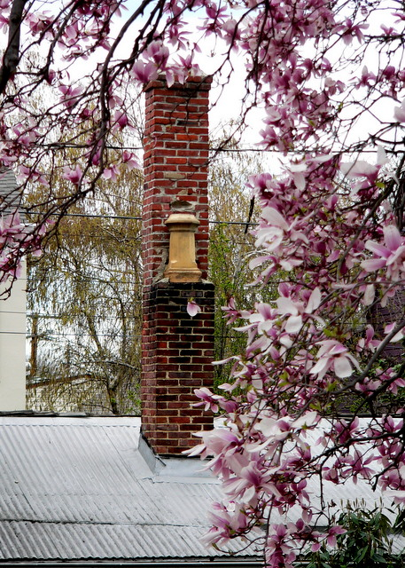 magnolia tree with chimney