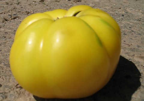 White Beauty Heirloom Tomato - a lovely yellow